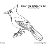 Jay (Stellar's)
