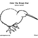 Kiwi (Brown)
