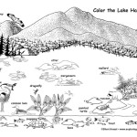 Lake Habitat and Wildlife