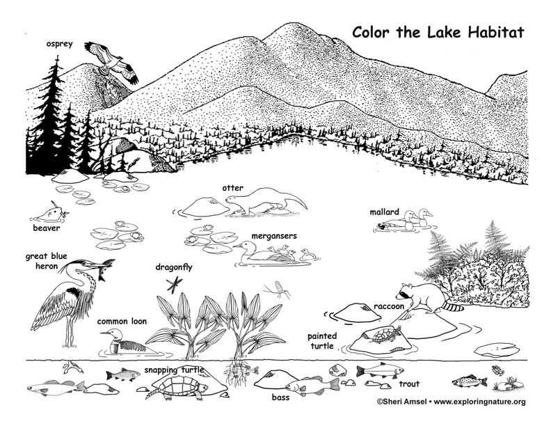 wildlife habitat coloring pages - photo#19