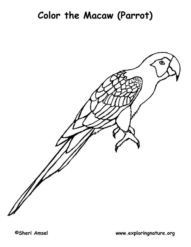 Free Lineart Kitten 3 533796200 also Construction Cat Dog Clipart further Kliban 3 besides Harryfkingstyles moreover Macaw Scarlet Parrot. on cats