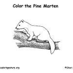 Marten (American)