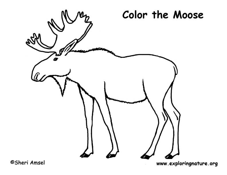 Moose coloring nature for Coloring pages moose