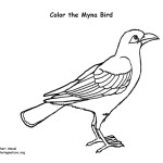myna bird coloring pages - photo#26