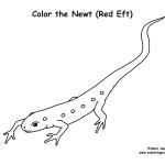 Newt (Red Eft)