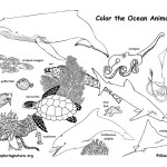 Ocean Animals (Labeled)