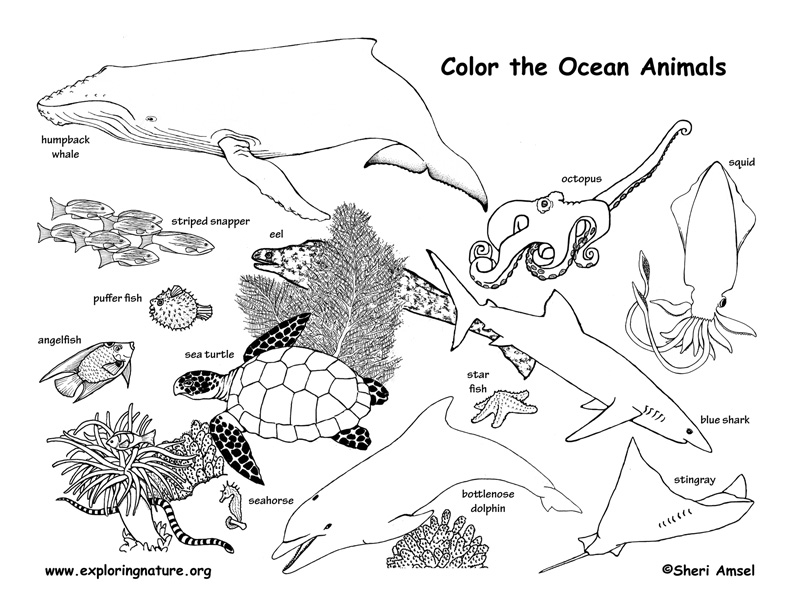 Nature Coloring Pages Pdf : Ocean animals labeled coloring nature