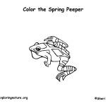Spring Peeper (Frog)