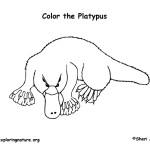 Platypus (Duck-billed)