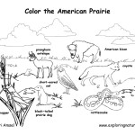 American Prairie Animals (Labeled)
