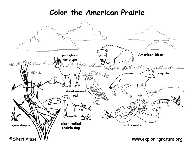American prairie animals labeled coloring nature for Prairie dog coloring page