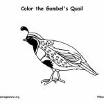 Quail (Gambel's)