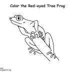 Tree Frog (Red-eyed)