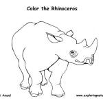 Rhinoceros (White)