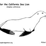Sea Lion (California)