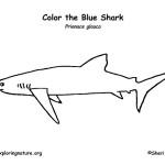 Shark (Blue)