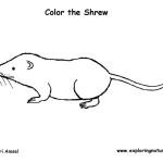 Shrew (Long-tailed)