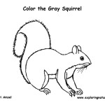 Squirrel (Eastern Gray)
