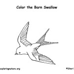 Swallow (Barn)