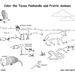 Texas Panhandle and Prairie Wildlife (Labeled)