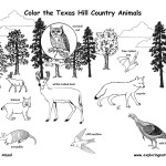 Texas Hill Country Wildlife (Labeled)