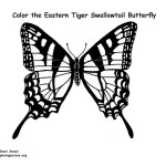 Butterfly (Eastern Tiger Swallowtail)