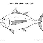 Tuna (Albacore)