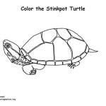 Turtle (Stinkpot)