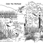 Wetland with Wildlife (Labeled)