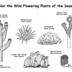 Desert Flowering Plants (Labeled)