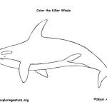 Whale (Killer)