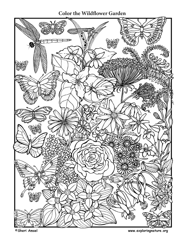 coloring pages for kids wild flowers | Wildflower Garden – Coloring Nature