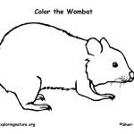 Wombat (Common)