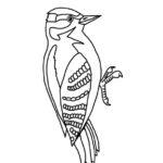 Woodpecker (Hairy)