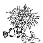 Sea Anemone and Clownfish