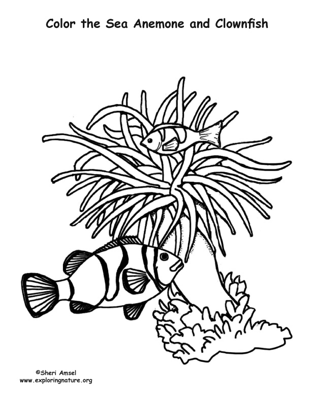 Sea Anemone and Clownfish – Coloring Nature