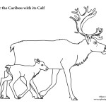 Caribou with Calf
