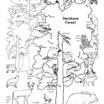 Deciduous Forest Animals (Labeled)
