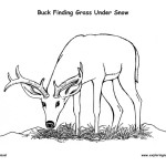 Buck Eating Grass Under Snow