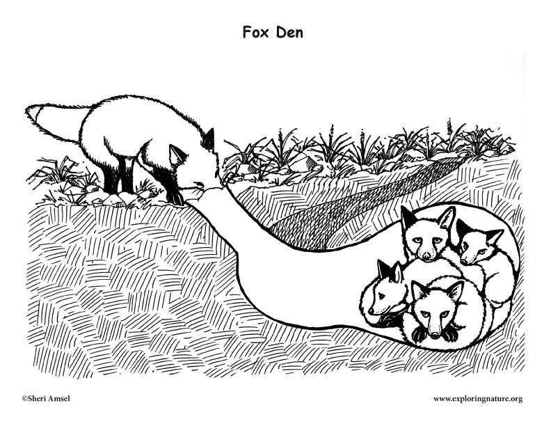 animal homes coloring pages | Fox Den – Coloring Nature