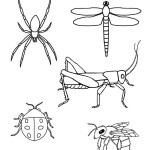 Insect and Spider Coloring