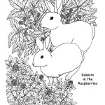 Rabbits in The Raspberries