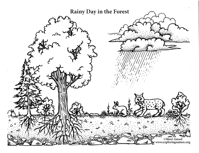 Rainy Day In The Forest