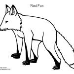 Fox (Red) 2