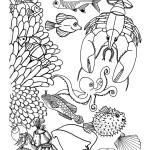 Reef Animals
