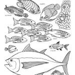 Ocean Fish Labeled