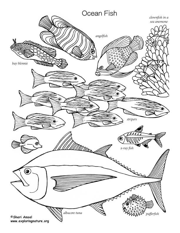 ocean fish labeled  u2013 coloring nature