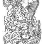 Butterfly Feast