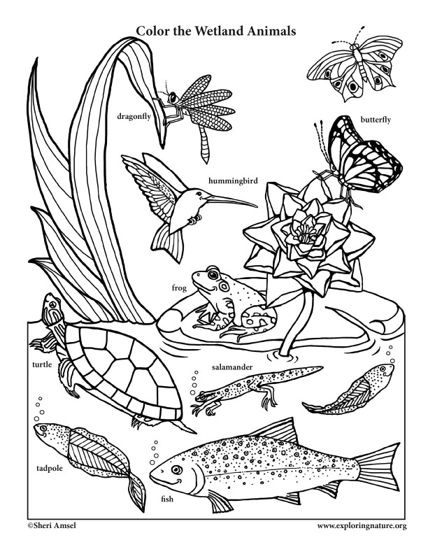 Coloring Pages Of Wetland Animals : Wetland animals labeled smiling for preschool coloring