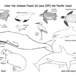 Pacific Coast Animals